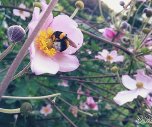 bee, bff, and blume image