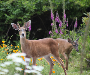 nature, animals, and deer image