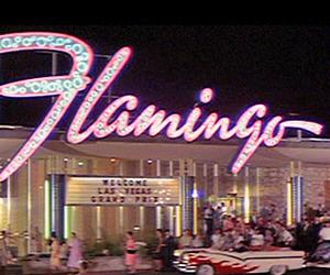 flamingo, vintage, and retro image