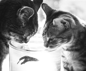 adorable, black and white, and bw image