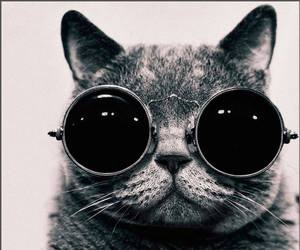 black and white, cat, and sunglasses image