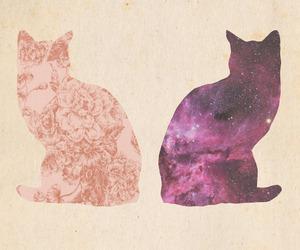 cat, galaxy, and animal image