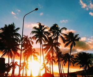 beach, palm trees, and summer image