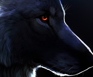 black, wolf, and eyes image