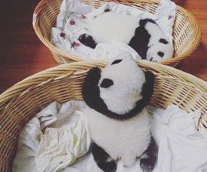 baby, panda, and cute image