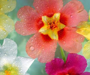 colored, flowers, and water drops image