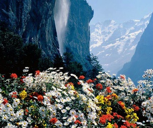 flowers, nature, and mountain image