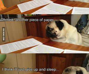 funny, homework, and dog image