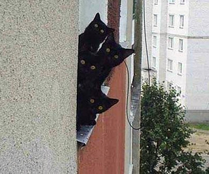 black, cat, and cats image