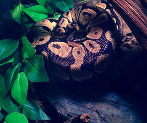 pet and snake image