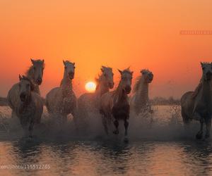 caballos, color, and puesta de sol. image