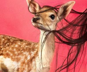 hair, deer, and animal image