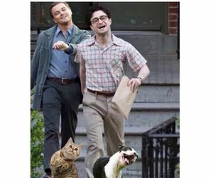 funny, dog, and cat image
