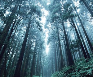 forest, background, and fog image