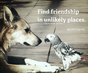 birds, dogs, and friendship image