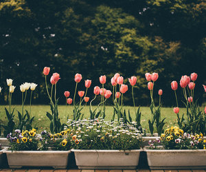 flowers, garden, and photography image