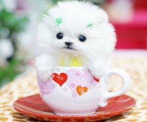 dog, puppy, and cup image