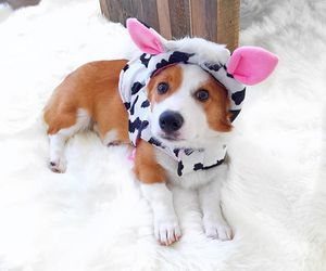 animals, youtube, and cute image