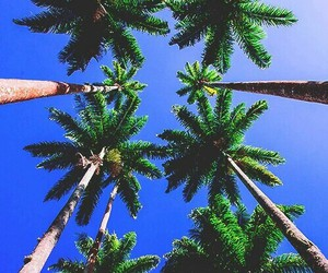 cool, tree, and summer image