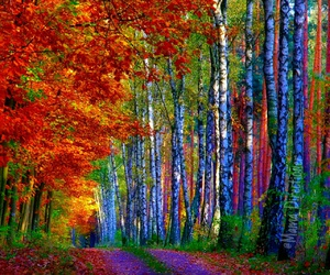 autumn, trees, and 🍂 image