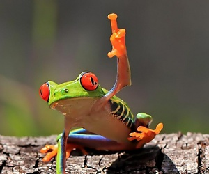 frog and funny image