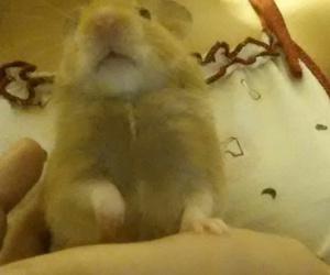 bonito, hamster, and animales image