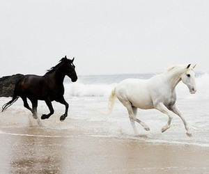 horse, black and white, and sea image