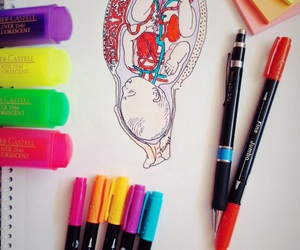 anatomy, baby, and blue image