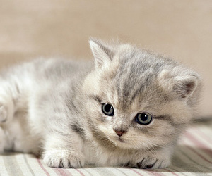 cat, cute, and perfect image