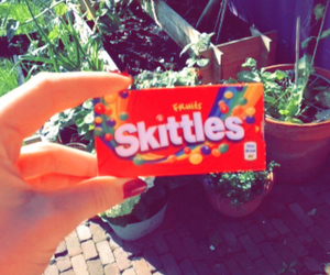 candy, netherlands, and garden image