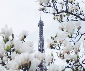 paris, france, and flowers image