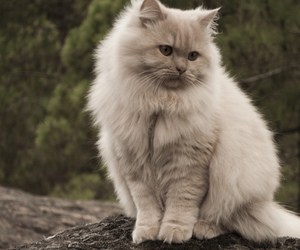 cat, photography, and white image