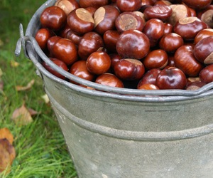autumn, bucket, and chestnuts image