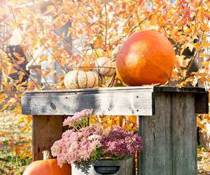 autumn, pumpkins, and fall image
