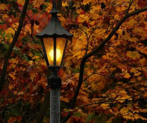autumn, light, and trees image