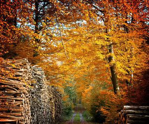 autumn, trees, and wood image