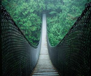 green, bridge, and nature image