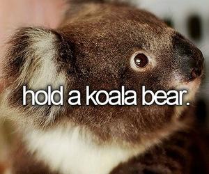 animal, Koala, and bucket list image