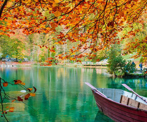 autumn, trees, and boat image
