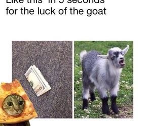 funny, goat, and grunge image