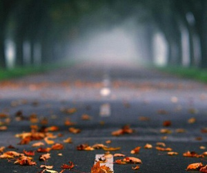 autumn, leaves, and road image