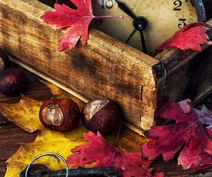 autumn, leaves, and chestnuts image