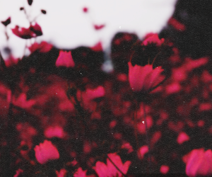 flowers, red, and header image