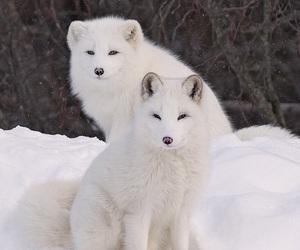 animals, beautiful, and white image