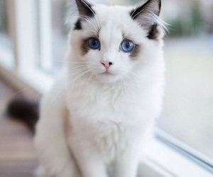 adorable, animals, and cats image