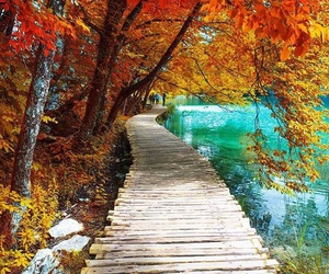 autumn, fall, and walkway image