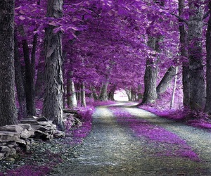 purple and trees image