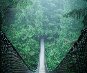 green, bridge, and nature image