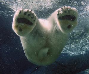 Polar Bear, bear, and water image