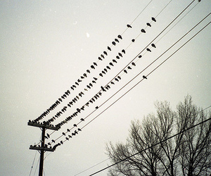 birds, photography, and wires image